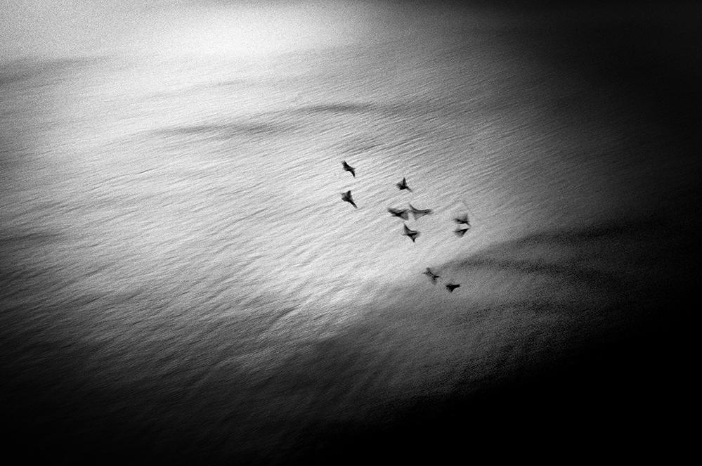 immagine in bianco e nero del mare con una serie di ucelli in volo sopra di esso