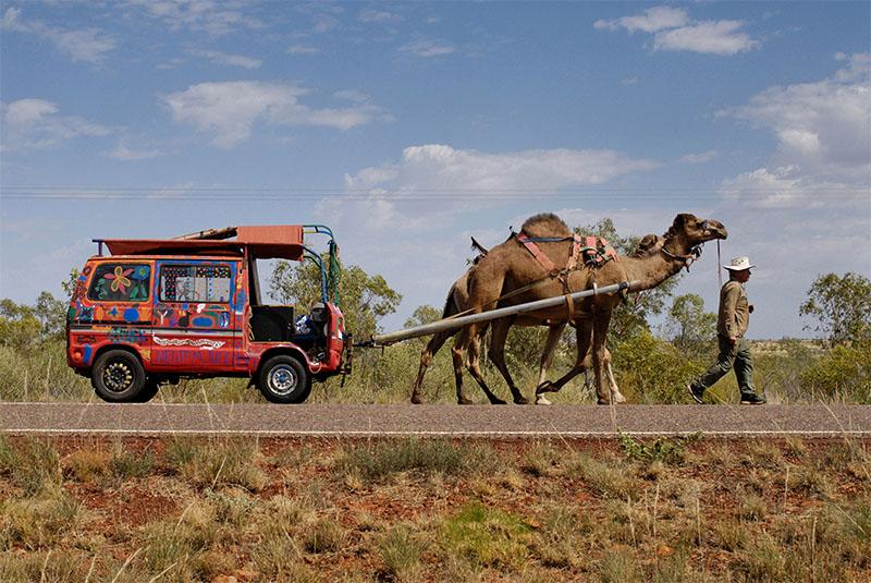 cammello trascina furgoncino
